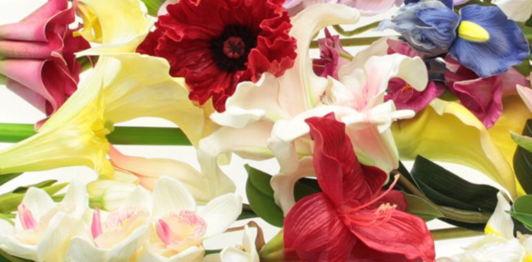 <h6>Significato dei fiori</h6>Approfondimento sul linguaggio dei fiori e sul significato che le diverse variet� possono avere. Scopri quali fiori regalare in particolari occasioni e sorprendi chi ami