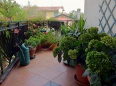 Giardino terrazzo - Giardino in terrazzo