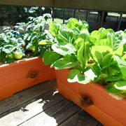 Orto in terrazzo - Giardino in terrazzo - Come realizzare un orto in ...