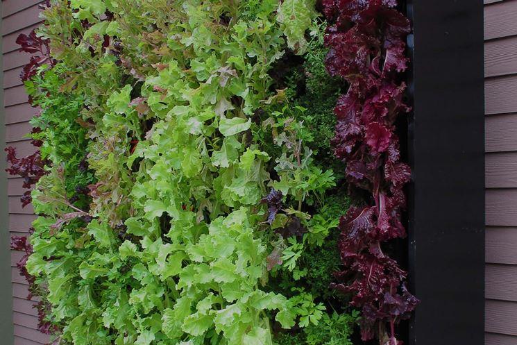 orto verticale insalata