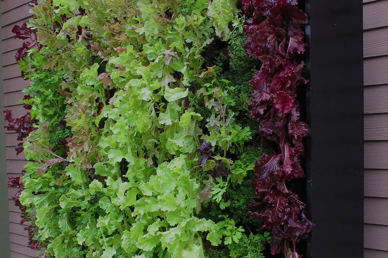 Orto verticale giardino in terrazzo for Giardino verticale balcone