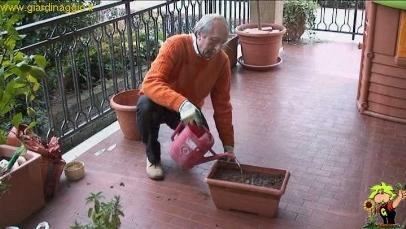 Coltivare le aromatiche in casa video orto - Coltivare piante aromatiche in casa ...