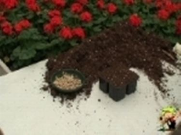 semina zucca e zucchina