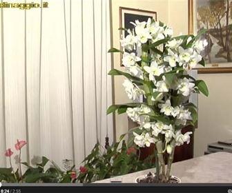 video piante appartamento