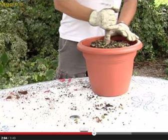 video tecniche giardinaggio