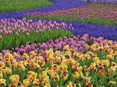 Giardini fioriti parchi e giardini for Piccoli giardini fioriti