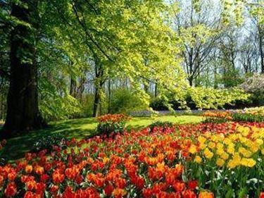 giardinifioriti2