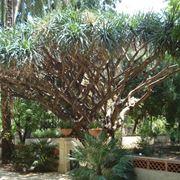 giardino botanico palermo