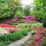 giardini fioriti foto